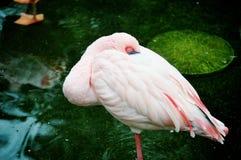 Flamingo-Hafen Stockfotografie