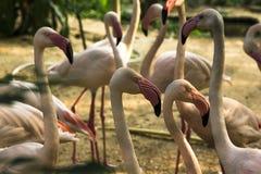 Flamingo-Hals und lange Feder-Rosa-Feder stockfotos