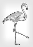 Flamingo in hatched design,  bird drawing with ornament on body on grey gradient background, tattoo template Royalty Free Stock Image