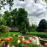 Flamingo in het park Stock Foto