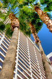 Flamingo Hotel Las Vegas, Nevada. Low perspective view of the Flamingo Hotel tower in Las Vegas Nevada Royalty Free Stock Photo