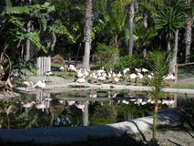 Flamingo i Selwo Aventure - Estepona Royaltyfria Bilder