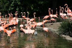 flamingo i USA Royaltyfria Foton