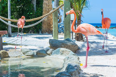 Flamingo and Iguana on the beach Royalty Free Stock Images