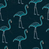 Flamingo illustration Stock Image