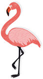 Flamingo vector. Vector illustration of a pink flamingo isolated on white background Royalty Free Stock Image