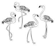 flamingo Ilustração isolada Imagens de Stock