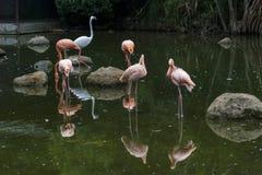 Flamingo im Park Lizenzfreies Stockfoto