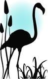 Flamingo im Wasser Lizenzfreie Stockfotografie