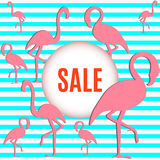 Flamingo with inscription sale Stock Photo