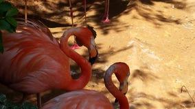 Flamingo Joe Stockfoto