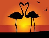 Flamingo. Kiss Royalty Free Stock Image