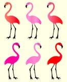flamingo 6 kleurenvariaties royalty-vrije stock fotografie