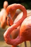flamingo kontempluje ptaka Obrazy Royalty Free