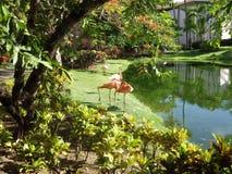 Flamingo-Lagune Lizenzfreies Stockbild