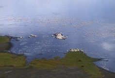 Flamingo lake 1. Shot from the cliff above, a lake edge covered with birds and falmingos stock images