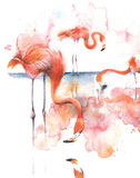 Flamingo on the lake eating pink bird bird of Africa watercolor illustration isolated on white background Royalty Free Stock Image