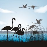 Flamingo on lake shore Stock Images