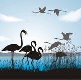 Flamingo on lake shore. Illustration silhouettes flamingo in nature Stock Images