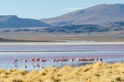 Flamingo on the lake Stock Image