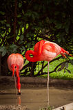 Flamingo in Lissabon-Zoo Stockbild