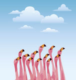 Flamingo. Looking sky Royalty Free Stock Images
