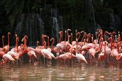 Flamingo mit Wasserfall Lizenzfreies Stockfoto