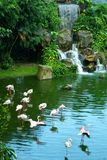 Flamingo na água Fotografia de Stock Royalty Free