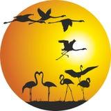 Flamingo och solnedgång i cirkeln Arkivfoton