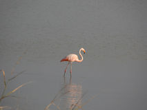 Flamingo 3 stock photos
