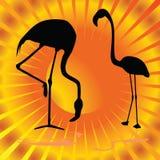 Flamingo op oranje vectorillustratie als achtergrond Stock Foto
