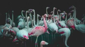 Flamingo over the world - Taipei royalty free stock photos