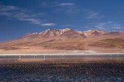 Flamingo på boliviansk Lake2 arkivbilder