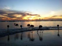 Flamingo på en strand Fotografering för Bildbyråer
