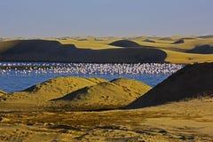 Flamingo på solnedgången i kust- damm av Walvis skäller Arkivbilder