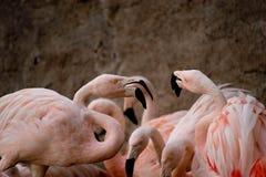 Flamingo på zoo royaltyfri fotografi