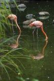 Flamingo parkerar in Royaltyfri Bild
