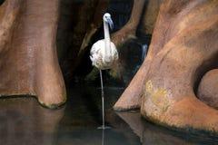 Flamingo at Parque das Aves - Foz do Iguacu, Parana, Brazil. Flamingo at Parque das Aves in Foz do Iguacu, Parana, Brazil stock photos