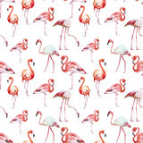 Flamingo pattern Royalty Free Stock Photo