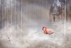 Enchanted mystical Flamingo Royalty Free Stock Photo