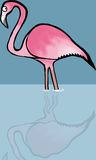 Flamingo. Pink flamingo standing in blue water Royalty Free Stock Images