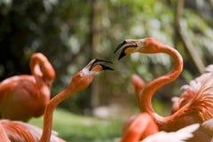 Flamingo-Portrait Stockfotos