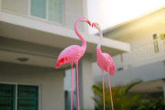 Flamingo. Is a pretty flamingo couple Royalty Free Stock Photo