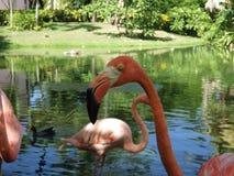 Flamingo-Profil Stockfoto