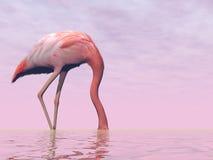 Flamingo que esconde sua cabeça na água - 3D rendem Fotografia de Stock