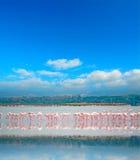 Flamingo reflection Stock Photography