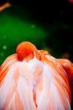 Flamingo am Rest Lizenzfreies Stockbild