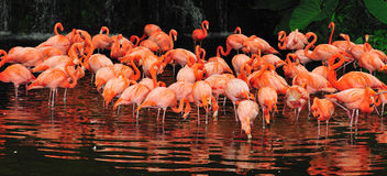 Flamingo's Stock Foto's