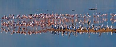 Flamingo's stock foto's
