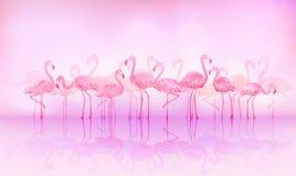 Flamingo's royalty-vrije illustratie